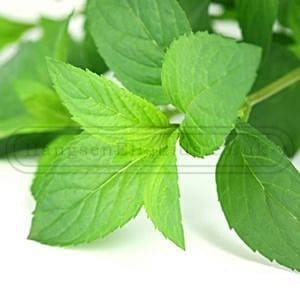 Peppermint_E_Liquid__81717_zoom
